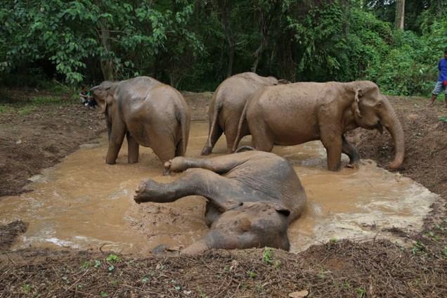 เที่ยวเมืองกาญ, ที่เที่ยว, กาญจนบุรี, บางช้างไทรโยค