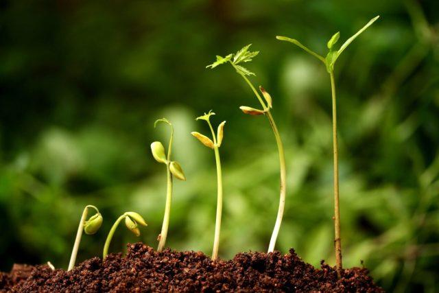 ฮอร์โมนพืช, การเจริญเติบโตของพืช, อาณาจักรพืช