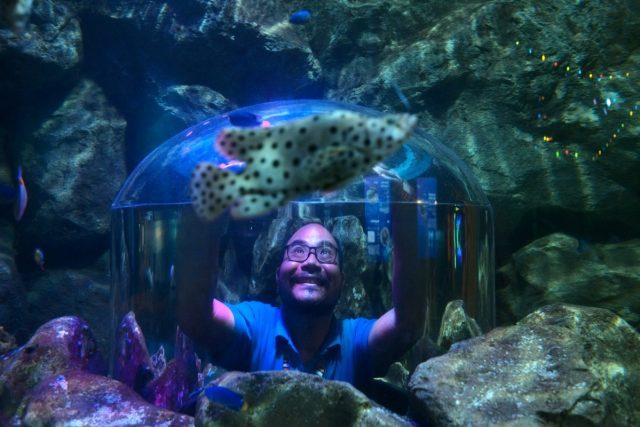พิพิธภัณฑ์สัตว์น้ำ, อควาเรียม, SEA LIFE,