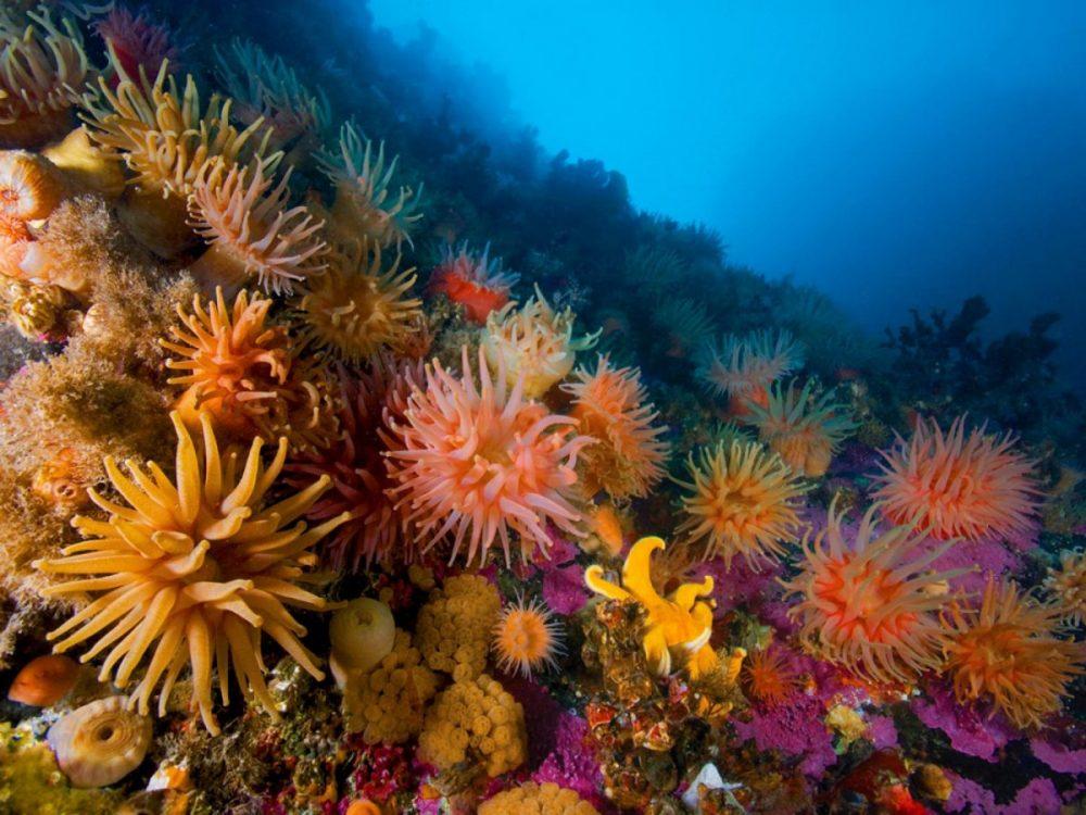 ไนดาเรีย, แมงกะพรุน, ไฮดรา, ปะการัง, ดอกไม้ทะเล