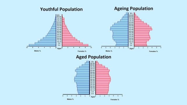 ประชากร, ประชากรศาสตร์, พีระมิดประชากร