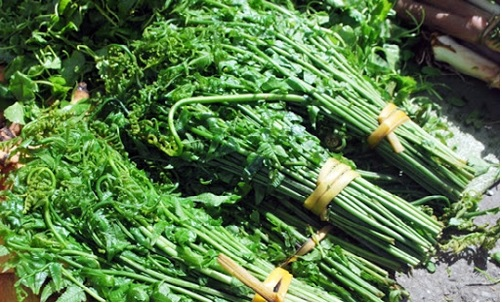 Các loại rau Việt Nam trong tiếng Nhật