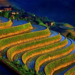 Ruong Bac Thang - Gao Sach Viet Nam - Gian Hang San Pham Tot -- 04