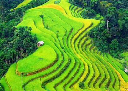 Ruong Bac Thang - Gao Sach Viet Nam - Gian Hang San Pham Tot -- 11