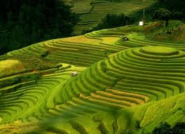 Ruong Bac Thang - Gao Sach Viet Nam - Gian Hang San Pham Tot -- 15