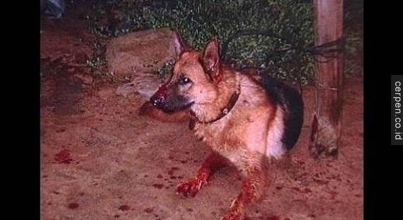lòng trung thành của chú chó