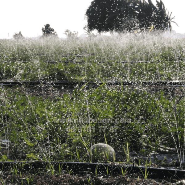 Dây tưới phun mưa 34mm Olympia