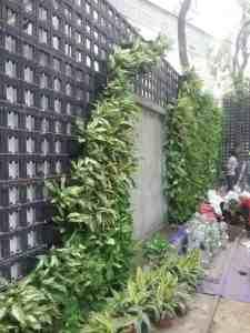 Tưới nhỏ giọt cho vườn tường