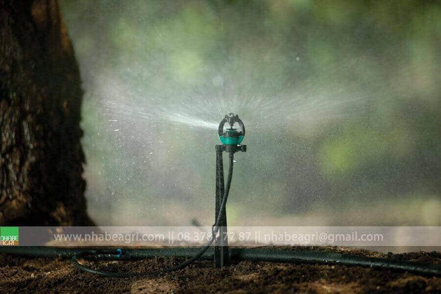 Tưới phun mưa cho cây trồng có tán rộng