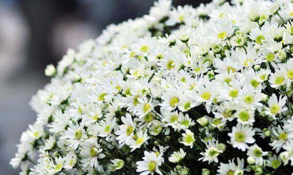 Hội chợ hoa - the flowers sale