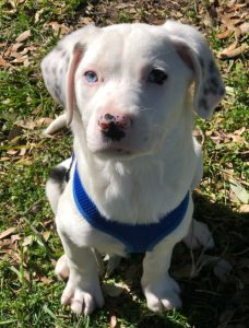 Adopt a puppy - New Hope Animal Rescue
