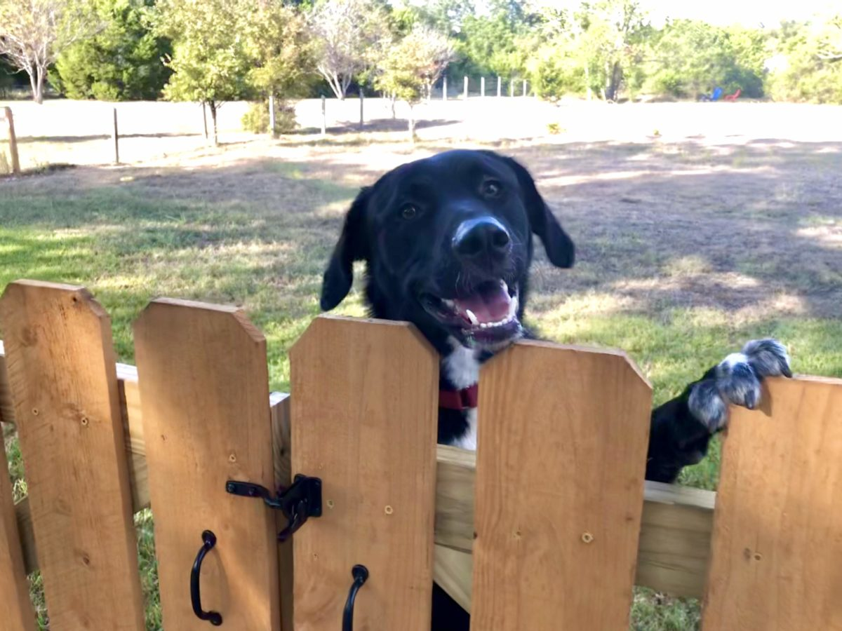 Adopt Milo - New Hope Animal Rescue