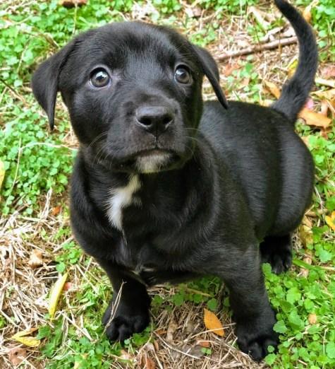 Adopt Ruthie - New Hope Animal Rescue
