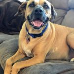 Adopt Tucker - New Hope Animal Rescue