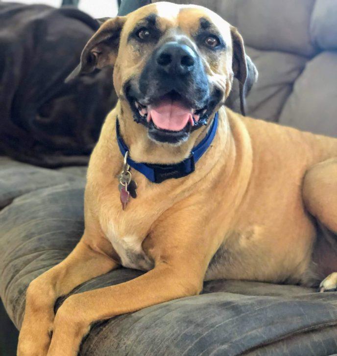Adopt Tucker - New Hope Animal Rescue