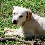 Canela - Female Terrier/Chihuahua 1yo 10lbs