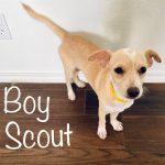 BoyScout - ADOPTED