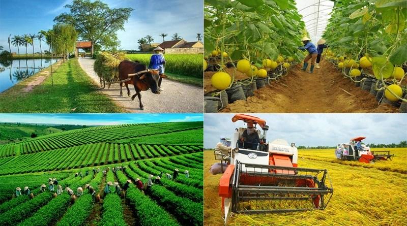 Cảnh giác với những luận điệu đánh giá tiêu cực về người nông dân
