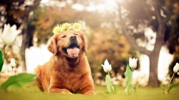 Hình ảnh vui nhộn về chú chó