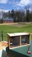 bees and barn