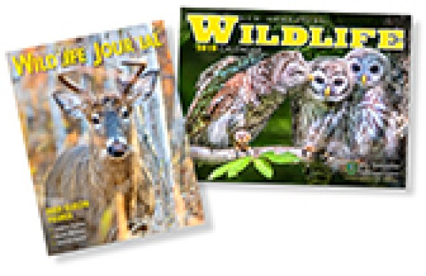 Wild Deals 2018 graphic