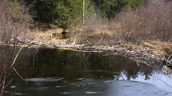 beaver dam 2