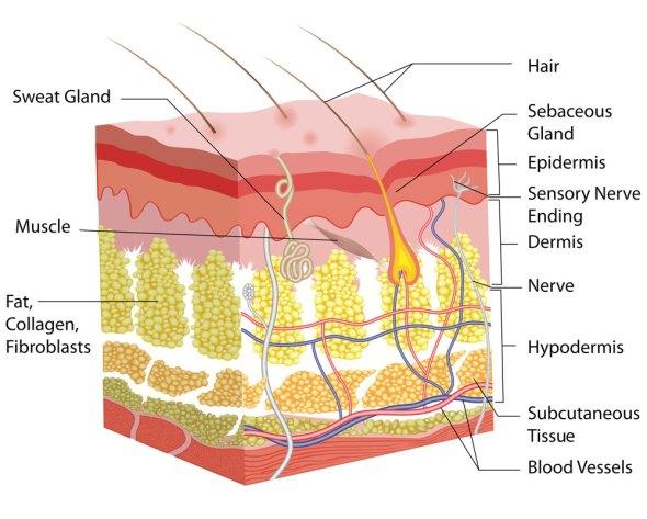 PH- Và những thứ cần lưu ý trong skincare