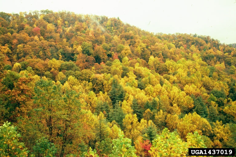 Precisely because it is during this. Temperate Deciduous Forests Natureworks