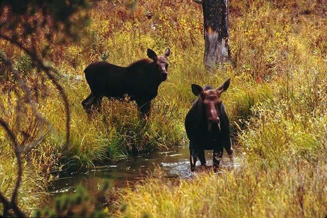 Fall In Maine Wallpaper Home Range Wildlife Journal Junior