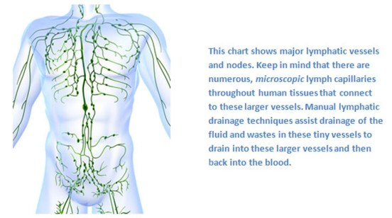 natural-health-sciences-arizona-lymphatic-chart
