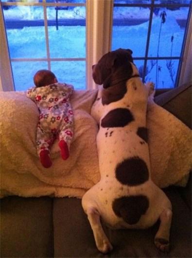 Ảnh đẹp thú vị: Những thiên thần nhỏ bên chú chó khổng lồ