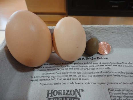 Chicken eggs and Quail egg