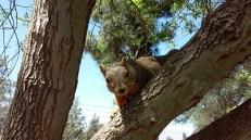Sóc (Squirrel at the park)