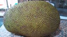 Mít - Jackfruit