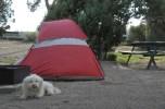 Ancient Cedars Campground
