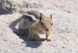 Squirrel at Crater Lake National Park