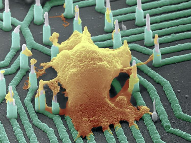 Nanowires-Recording-Neuronal-Activity
