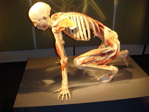 Human Body Revealed Exhibit