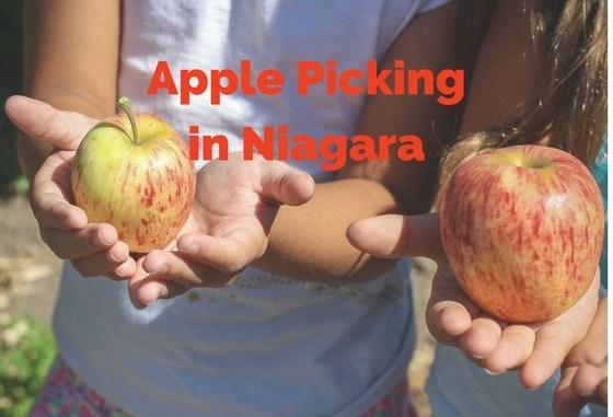 apple picking in Niagara