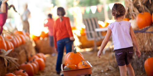 fall festivals in niagara
