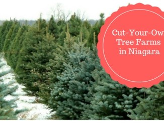 cut your own trees in niagara