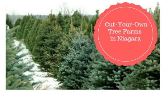 cut your own trees in niagara