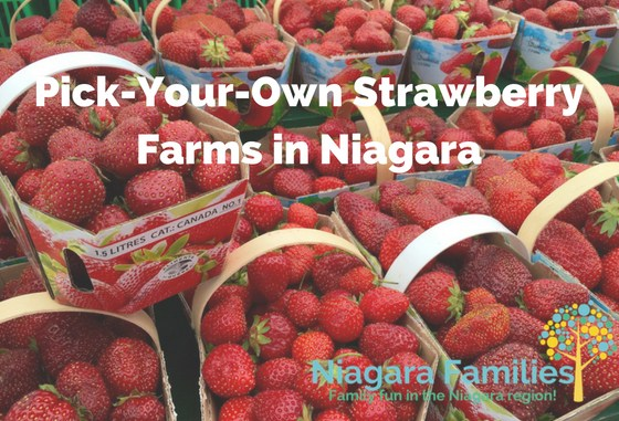 pick-your-own strawberry farms