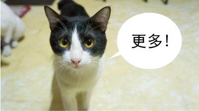geng_duo_cat