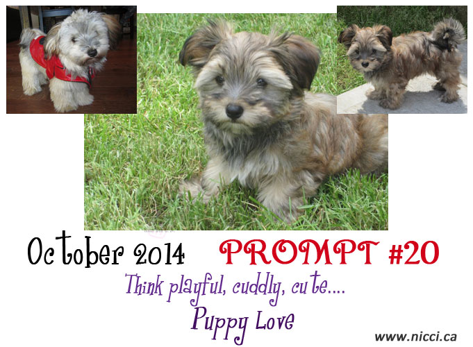 2014-Oct-propmt-20