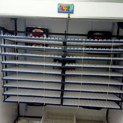 1320-eggs-incubator 2
