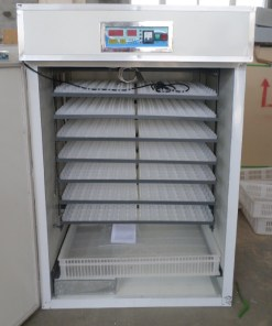528-eggs-incubator