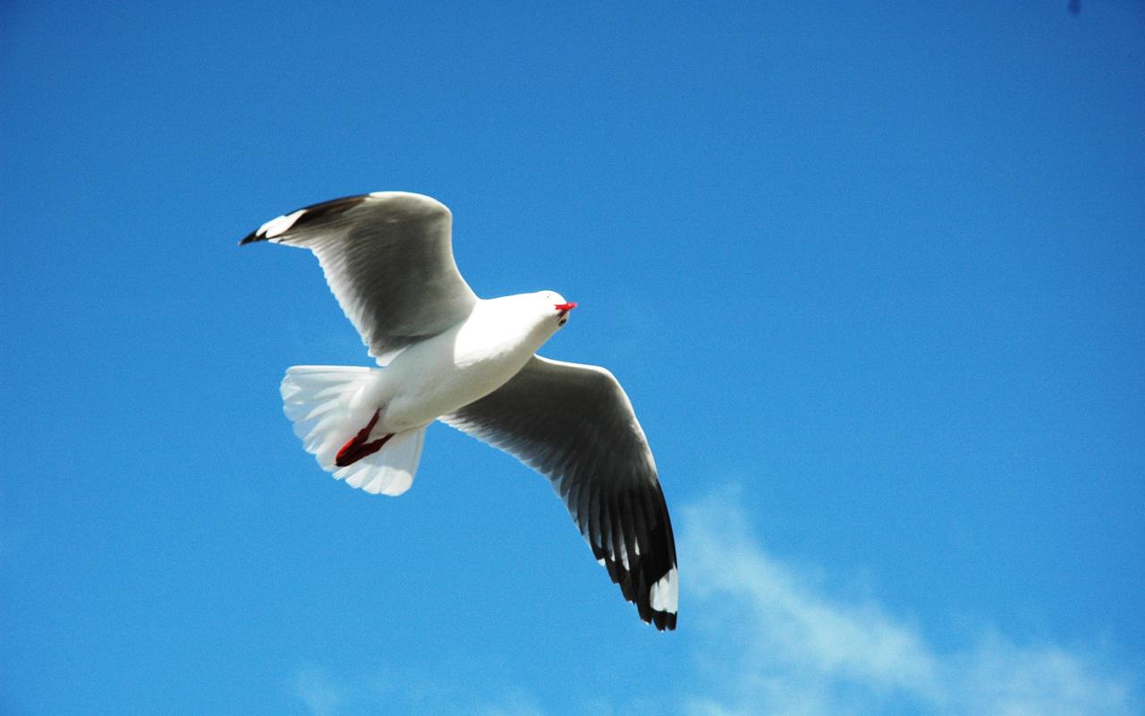 burungterbang  Tinta Berbicara