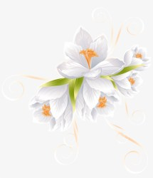 White Flower Decor Transparent Png Clip Art Image Vector Flowers Transparent PNG 6342x7000 Free Download on NicePNG