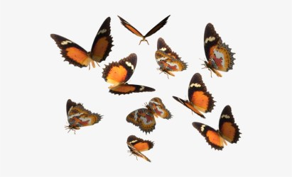 Monarch Butterfly Clipart Deviantart Real Butterfly Png Transparent PNG 600x420 Free Download on NicePNG